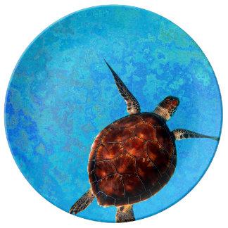 Assiette En Porcelaine Plat de tortue de mer
