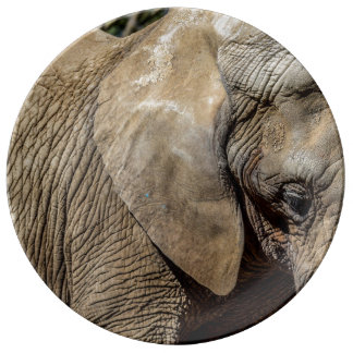 Assiette En Porcelaine Plat d'éléphant