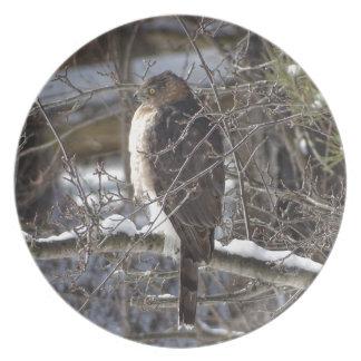 Assiette faucon Large-à ailes