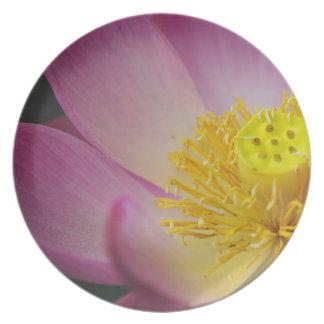 Assiette fleur de lotus