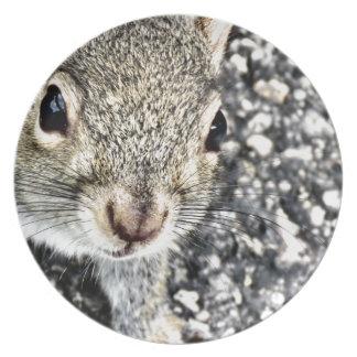 Assiette Haut étroit d'écureuil !