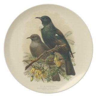 Assiette Oiseaux vintages de NZ de la Science - plat de