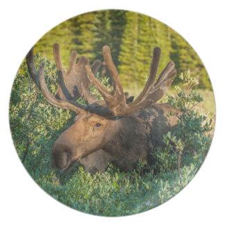 Assiette Orignaux de Taureau en velours, le Colorado