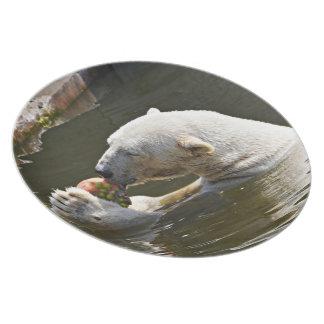 Assiette Ours blanc mangeant du fruit dans l'eau