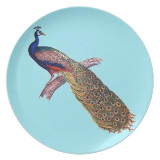Assiette Paon masculin coloré de plat de turquoise