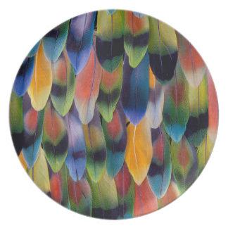 Assiette Plumes colorées de perroquet de perruche