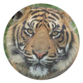 Assiette Tigre adulte