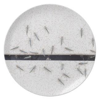 Assiette Troupeau des moustiques qui entrent dans la salle