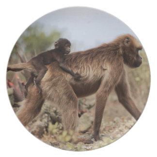 Assiettes En Mélamine Babouin femelle de gelada avec un bébé