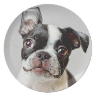 Assiettes En Mélamine Boston Terrier