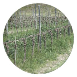 Assiettes En Mélamine Champ nu de vignoble en hiver. La Toscane, Italie