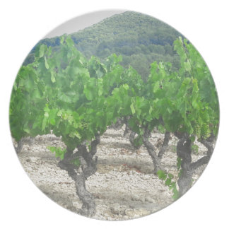 Assiettes En Mélamine Conception de vin