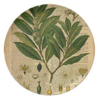 Assiettes En Mélamine Copie botanique à la page de vieux livre