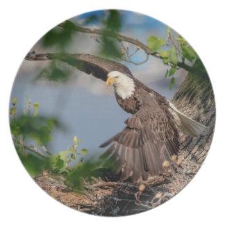 Assiettes En Mélamine Eagle chauve partant du nid