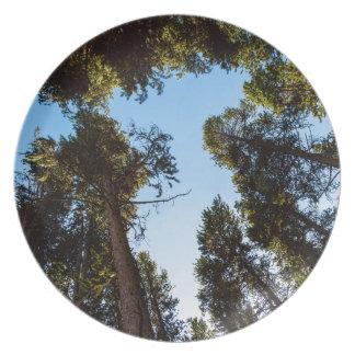 Assiettes En Mélamine Étoile de la forêt de pin