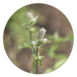 Assiettes En Mélamine Fleurs d'un plante de menthe poivrée, piperita du