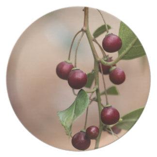 Assiettes En Mélamine Fruits d'un nerprun brillant de feuille