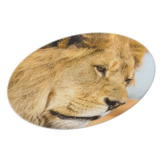 Assiettes En Mélamine Grand lion regardant loin