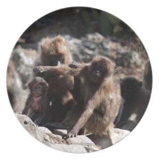Assiettes En Mélamine Groupe de babouins de gelada (gelada de