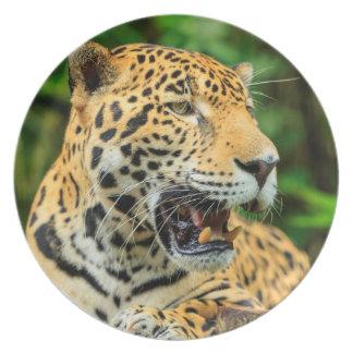 Assiettes En Mélamine Jaguar montre ses dents, Belize