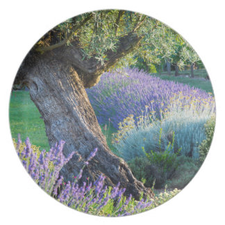 Fleur de lavande assiettes fleur de lavande assiettes design for Jardin pittoresque