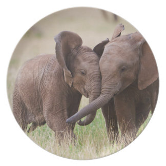 Assiettes En Mélamine Jeune jeu d'éléphants africains