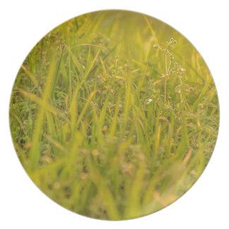 Assiettes En Mélamine Photo de détail d'herbe