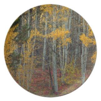 Assiettes En Mélamine Plancher rouge de forêt