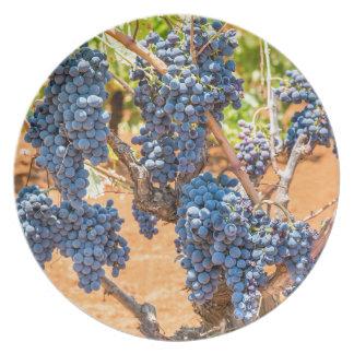 Assiettes En Mélamine Plante de raisin avec les groupes grapes.JPG bleu