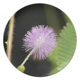 Assiettes En Mélamine Plante sensible (pudica de mimosa)