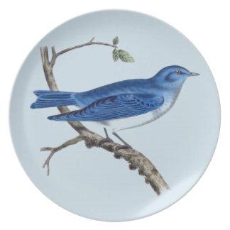 Assiettes En Mélamine Plat bleu vintage de mélamine d'oiseau