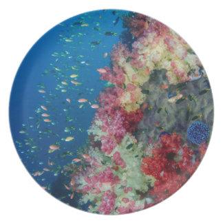 Assiettes En Mélamine Récif coralien sous-marin, Indonésie