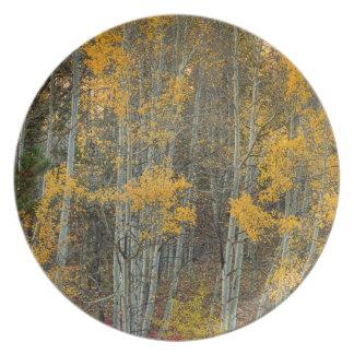 Assiettes En Mélamine Région sauvage de forêt d'Aspen
