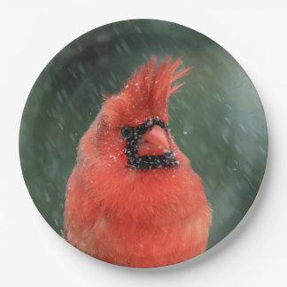 Assiettes En Papier Cardinal dans un pin pendant une tempête de neige