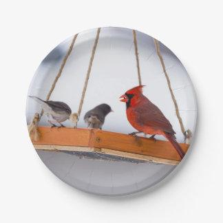 Assiettes En Papier Cardinal et Juncos