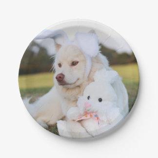 Assiettes En Papier Chiot finlandais blanc de Lapphund mignon