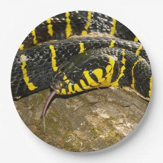 Assiettes En Papier Dendrophila de Boiga ou serpent de palétuvier