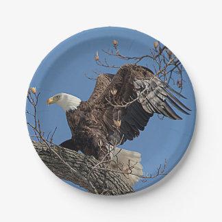 Assiettes En Papier Eagle chauve sur une branche d'arbre