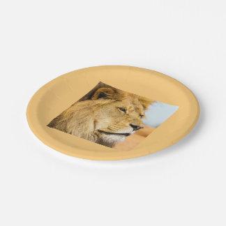 Assiettes En Papier Grand lion regardant loin