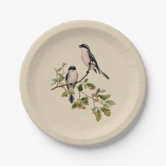 Assiettes En Papier Jolis oiseaux vintages sur le beige