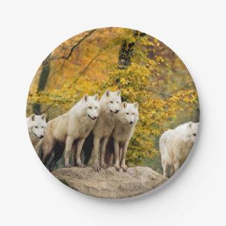 Assiettes En Papier Loup blanc - loup de neige - animal de loup