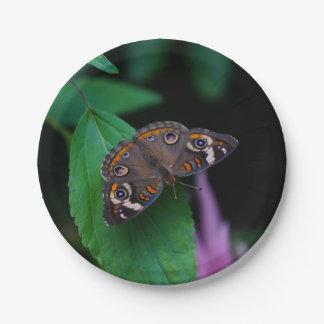 Assiettes En Papier Papillon repéré
