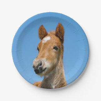 Assiettes En Papier Photo islandaise mignonne d'avant de tête de poney