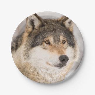Assiettes En Papier Plaques à papier de sourire de loup amical