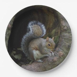 Assiettes En Papier Plaques à papier d'écureuil