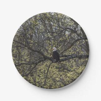 Assiettes En Papier Surveillance d'Eagle Painterly