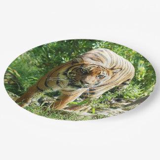 Assiettes En Papier Tigre de Sumatran