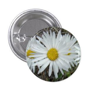 Aster lisse des fleurs sauvages F0042 blancs Badge