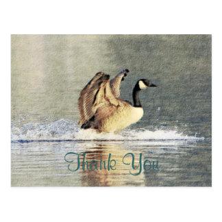Atterrissage d'oie du Canada Cartes Postales