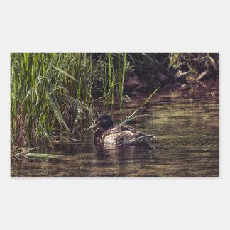 Au bord de l'étang sticker rectangulaire